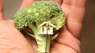 Man Creates Tiny Tree House on Piece of Broccoli - Video