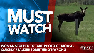 Woman stopped to take photo of moose, quickly realizes something's wrong - Video