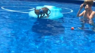 Deja the cat goes swimming - Video