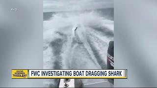 FWC investigating after social media video of shark being dragged - Video