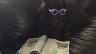Meet The Coolest Dog EVER - Video