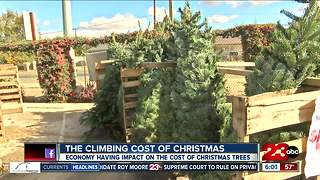 Christmas tree prices increasing this year - Video