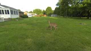 Doe Mother Gets Adorable Fawns to Follow Her