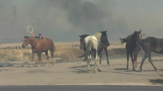Horses are being evacuated in fire near Cottonwood and Pacheco - Video