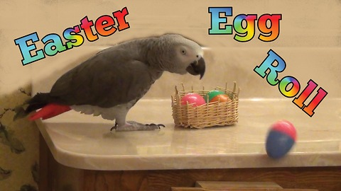 Einstein the Talking Parrot's Easter egg roll