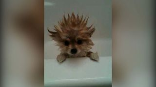 12 Dogs Have A Bad Hair Day - Video