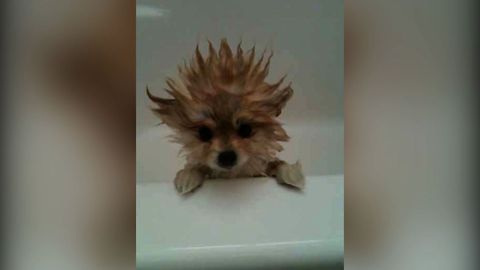 12 Dogs Have A Bad Hair Day