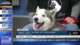 Rescues in Action Feb. 22 | Ozzy needs furever home