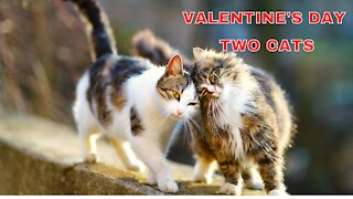 Valentine's Day two cats