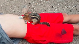 Boy Feeds Chipmunk Sunflower Seeds From His Bellybutton - Video