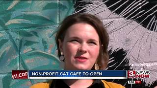 Omaha gets first cat cafe