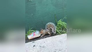 Squirrel in New York seen drinking coffee