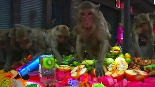 Monkey Feast in Thailand - Video