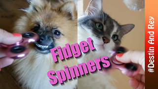 Pets react to fidget spinner - Video