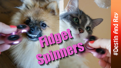 Pets react to fidget spinner