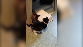 Cute Cats Play Hide And Seek - Video