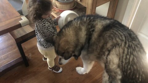 Toddler tries to give her dog dinner using empty food bowl