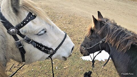 Foal goes on his first trail ride without his Mamma