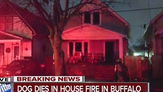Dog dies in early morning Buffalo fire - Video