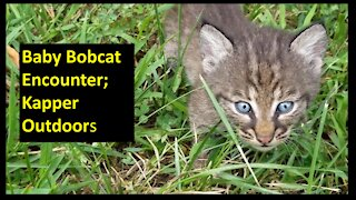 Amazing encounter with Baby Bobcats!