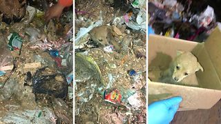 Tiny Disoriented Puppy Rescued From Pile Of Garbage In Montevideo