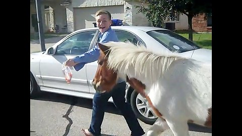 Lost Horses And Ponies In Friendly Neighborhood Get Led Back Home With Carrots Through The Woods