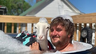 Devoted Couple Postpone Wedding After Spending Over £30k On Disabled Sheep – Who Even Sleeps In Their Bed