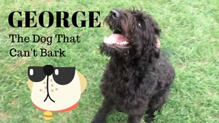 Meet George, the dog that can't bark!
