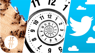 Random Numbers 3: Ants, Time Travel & Twitter - Video