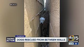 Dogs rescued from between walls by animal control - Video