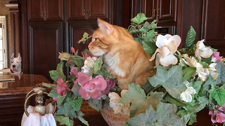 Funny cat decides to sleep in flower bowl - Video