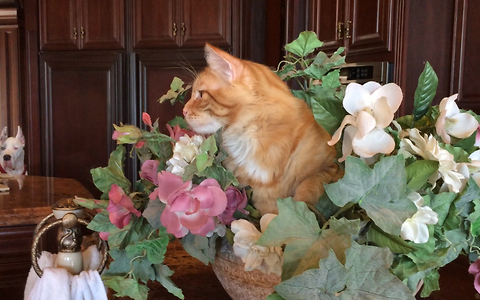Funny cat decides to sleep in flower bowl