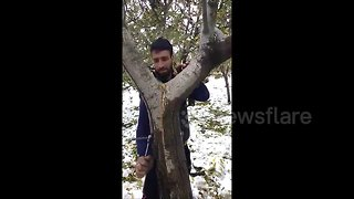 Strangely satisfying: man repairs split apple tree