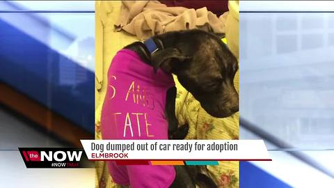 Dog dumped out of car ready for adoption
