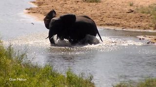 Adorable elephant causes a splash as his trips into the water