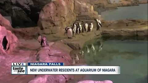 Meeting some of the new residents at Aquarium of Niagara Falls