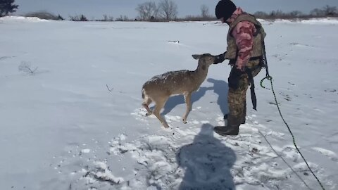 Game Warden rescues deer stranded on icy river