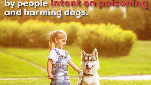 People Are Poisoning Dogs