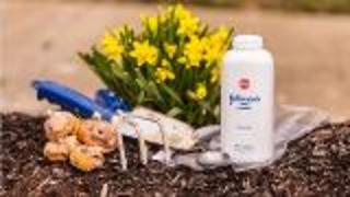 Protect Flower Bulbs From Pests and Rot - Video