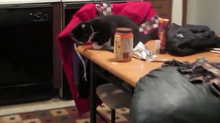 Kitten knocks food off table, feeds the dog - Video