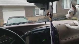 Funny Dog Goes Crazy When The Windshield Wipers Come On - Video