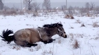 Heavy snowfall brings out this playful horse's inner child - Video