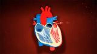 What is the Cardiovascular System?