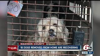 18 dogs removed from animal hoarding situation recovering - Video