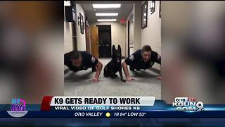 K9 does push-ups with Officers - Video
