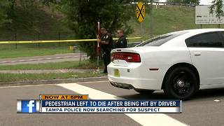 Pedestrian hit and killed in South Tampa - Video
