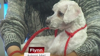 Pick of the Litter: Flynn 12/8/16 - Video