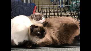 Animal control in Boulder City removes 46 pets from mobile home