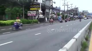 Runaway buffalo chased down street after goring six in Thailand - Video