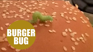 Dad finds very hungry caterpillar on his McDonald's Big Tasty - Video